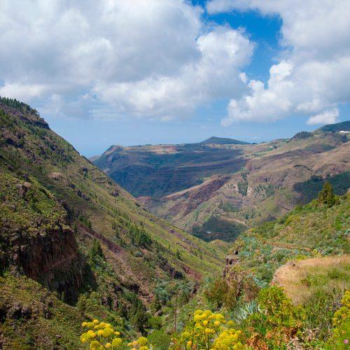 Licor 43 ha descubierto una de las últimas plantaciones de café de Europa
